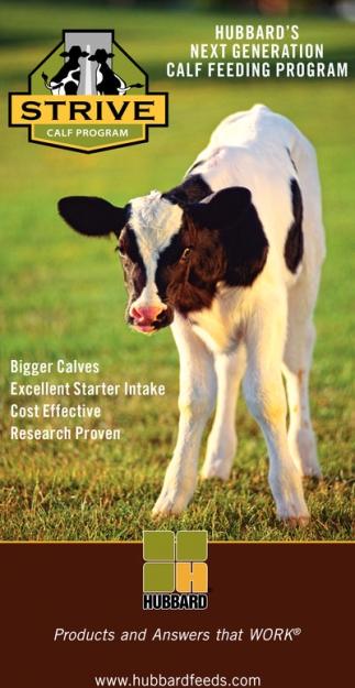 Strive Calf Program