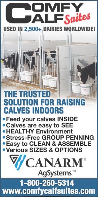 Comfy Calf Suites